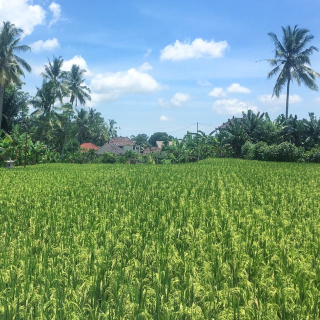 Find Rent Houses: Find A House For Rent In Ubud