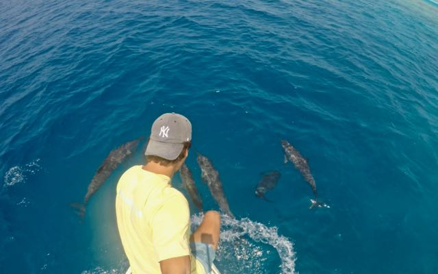 dolphin watching fulidhoo