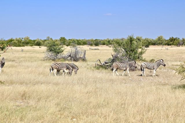 Namibia Itinerary For 7 Days (Etosha, Skeleton Coast