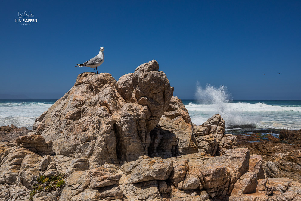 Travel To Hermanus South Africa