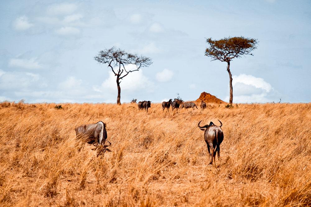 tanzania travel blog 1