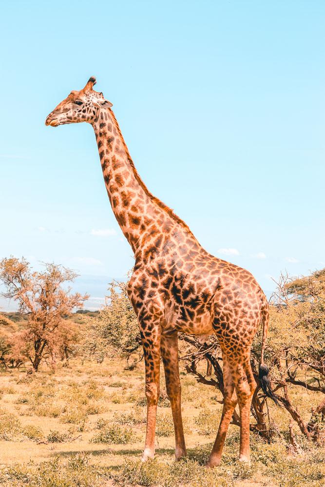 tanzania travel blog 5