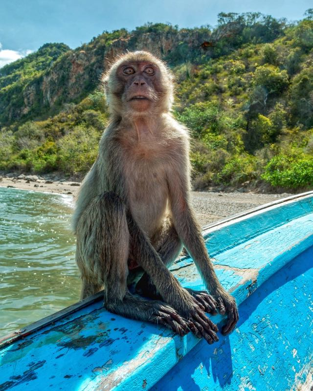 thailand travel tips stay away from monkeys