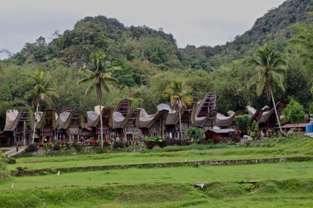 Weekly Adventures Walking Dead Of Toraja And The King Of Bali